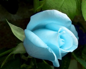 Sisterhood of the Rose of the Blue Ray of Love, Wisdom & Service to Others
