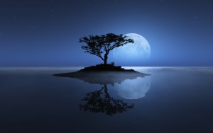 tree-sea-moon-reflection-island-stars-night-water-ocean-shadownature